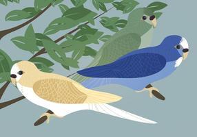 Budgies Vector Illustratie