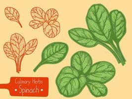 bladeren van spinazie