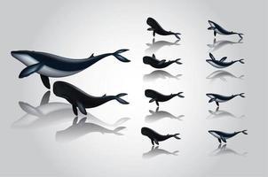 blauwe vinvissen met reflecties set vector