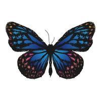 illustratie tekening stijl van vlinder