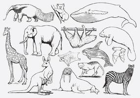 Kleuren van dieren voor kinderen vector