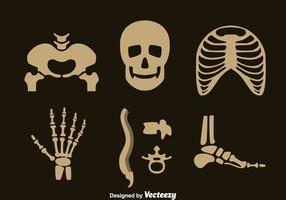 Menselijke Skelet Vector Set