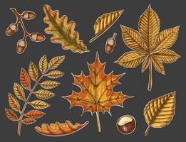 set van herfstbladeren op een donkere achtergrond vector