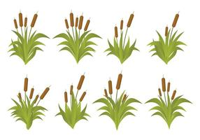 Gratis Cattails Vector Set