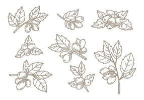 Rosehip doodle vector