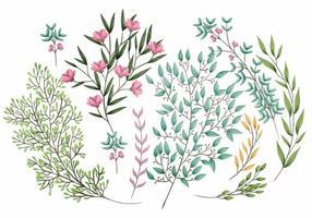 Vector Bloemen Elementen
