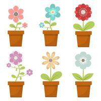 huis bloem in pot
