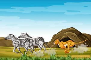 luipaard jagende zebra's vector