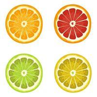 set van citrus geïsoleerd vector