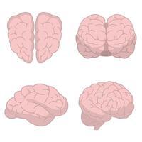 menselijk brein geïsoleerd