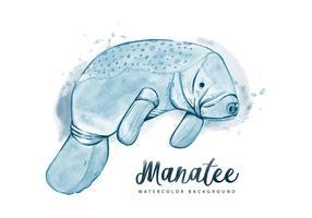 Gratis Manatee Waterverf Achtergrond vector
