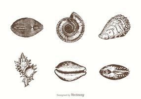 Vrije Hand Getekende Zeeschelpen Vector