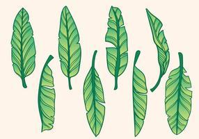 Gratis Handgetekende Banaanboom Vector