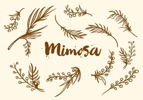 Vrije Handgetekende Mimosa Plant Vector