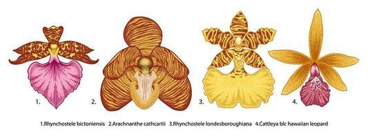hand getrokken verscheidenheid aan orchideebloemen instellen