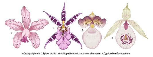 orchideebloem tekening set