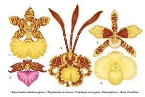 verscheidenheid aan orchideebloemen hand getrokken set