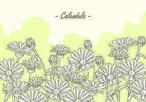 Calendula Hand Tekening Gratis Vector