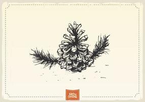 Antieke Pine Cone Sketch Vector