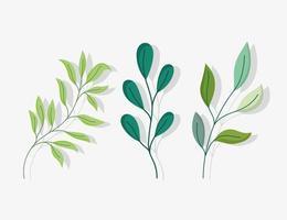 set van groene takken met bladeren vector