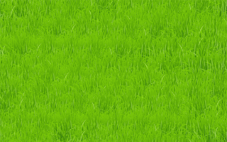 groen grasveld vector