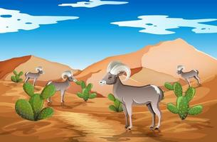 wild woestijnlandschap bij daglicht