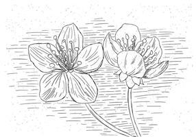 Gratis Flower Vector Illustration