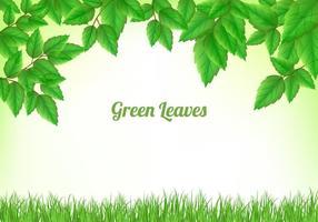 Groene bladeren achtergrond vector