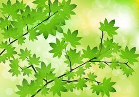 Groene esdoorn bladeren Vector
