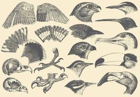 Vogel Part Tekeningen vector