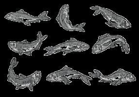 Gratis Hand Drawn Sardines Vectoren