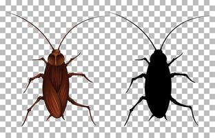 kakkerlak met zijn silhouet