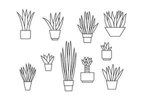 Gratis Yucca Illustratie van de Lijn Vector