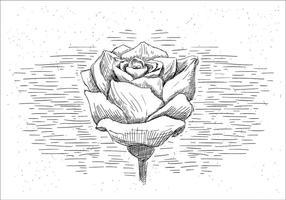 Vrije Handgetekende Vector Rose