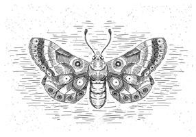 Gratis Hand Drawn Vector Butterfly