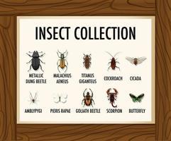 set van insecten collectie banner op houten tafel