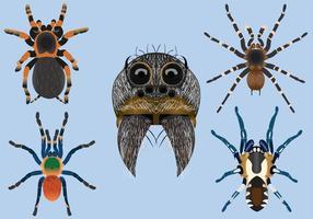Tarantula vector pack