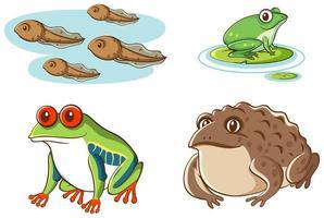geïsoleerd beeld van kikkervisjes en kikkers vector