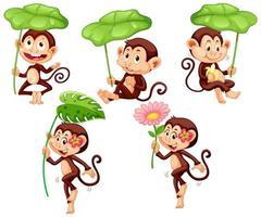 set van schattige aap met groen blad op witte achtergrond vector