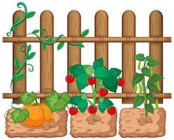 groenten groeien in de tuin op witte achtergrond vector