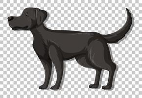 zwarte labrador retriever in staande positie stripfiguur geïsoleerd op transparante achtergrond