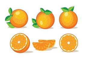 Set Geïsoleerde Clementine Vruchten Op Een Witte Achtergrond vector