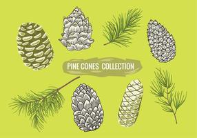 Pine Branch Met Pine Cones Set Collection vector