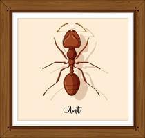 werkende mier op houten frame