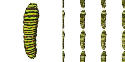 caterpillar insect geïsoleerd op een witte achtergrond en naadloos vector