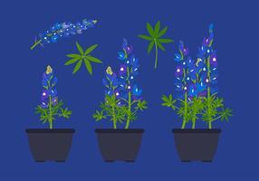 Bluebonnet Bloemplant Gratis Vector