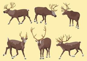 Caribou Vector Pictogrammen