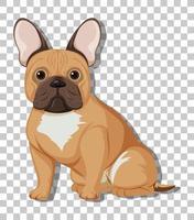 Franse bulldog in zittende positie