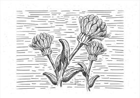 Vrije Hand Getekende Vector Bloemen Illustratie