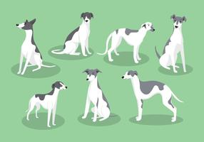 Whippet Dog Vectoren